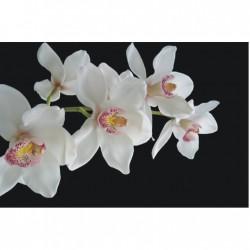 Biele kvety na tmavon pozadí
