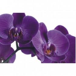 Obraz fialového kvetu F000474F