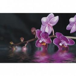 Obraz s fialovou orchideou F001232F