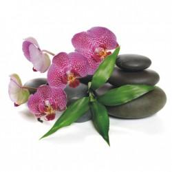 Obraz s fialovou orchideou T023