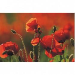 Oranžovo-zelený obraz  F000893F