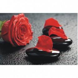 Obraz červenej ruže T036