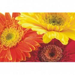 Obraz farebných kvetov F000514F