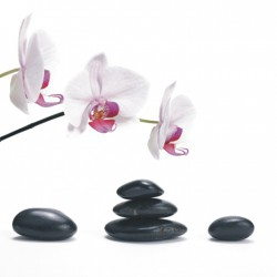 Orchidea na bielom pozadí T004