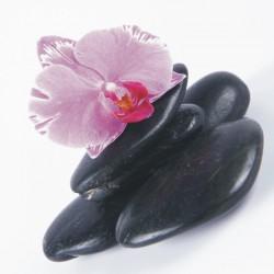 Obraz fialovej orchidei so skalamiT006