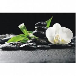 Biela orchidea na čiernom podklade