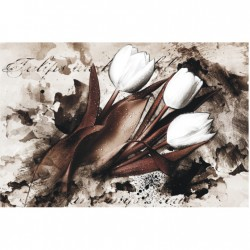 Bielo-hnedé tulipány