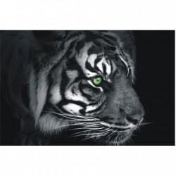 Biely tiger na tmavom podklade