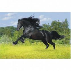 Čierny kôň na zelenej lúke